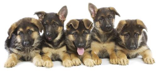 Inzertný portál - inzercia psov