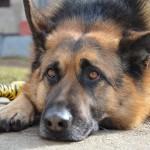 Cvičte svojho psa efektívne