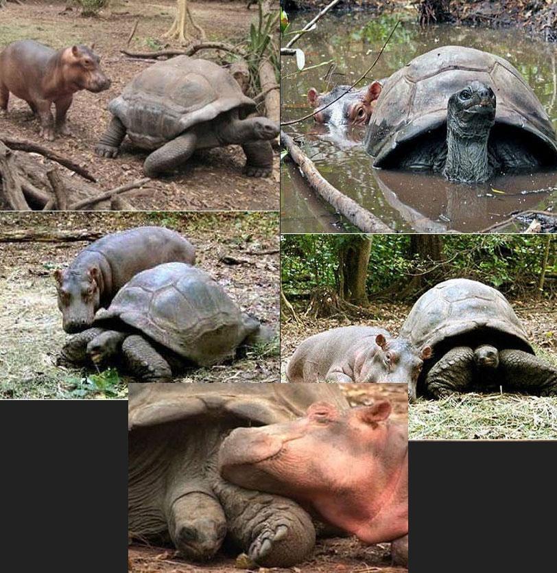 Hroch a korytnačka