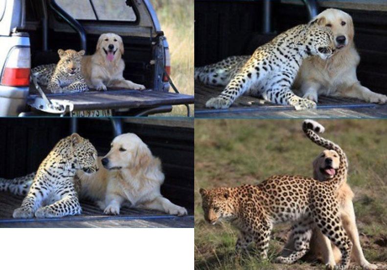 pes-leopard