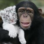 Nádherné fotografie priateľstva medzi zvieratami