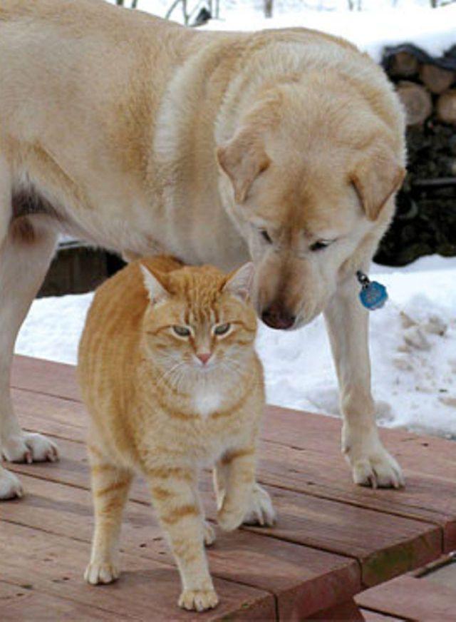 Pes a macka