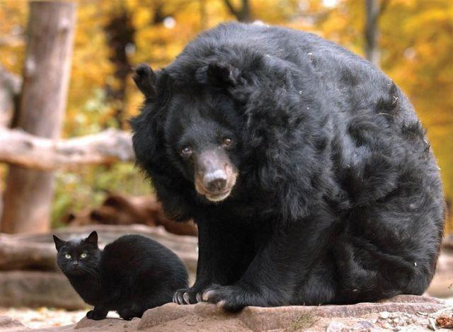 Medved a macka