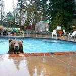Žije doma s medveďom – krásny príbeh