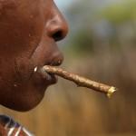 Zubná kefka Miswak – ekologická čistiaca tyčinka